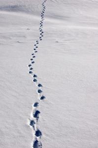 bigstock-human-footprints-in-a-snow-cov-20216255
